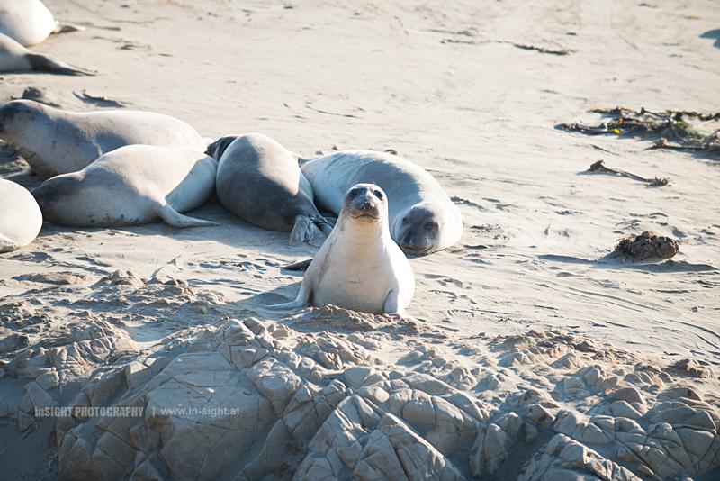 A litte Sea Lion spotting visitors