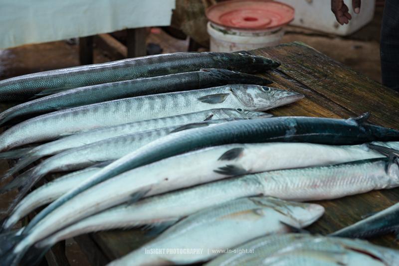 SRI-LANKA_NEGOMBO-FISHMARKET_20150902_005