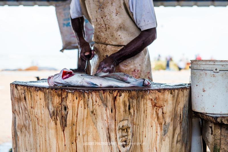 A Fisherman at work