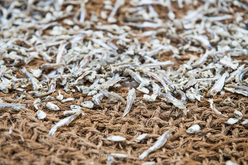 SRI-LANKA_NEGOMBO-FISHMARKET_20150902_010