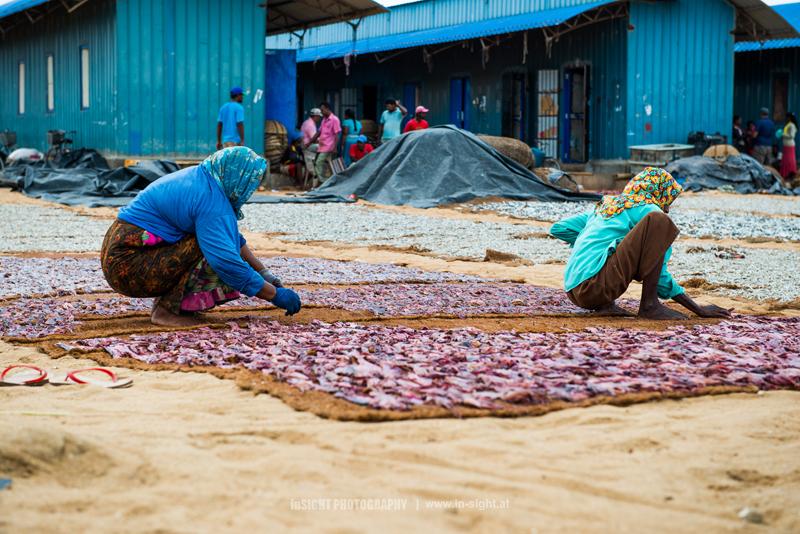 Drying salted Fish, Negombo, Sri Lanka