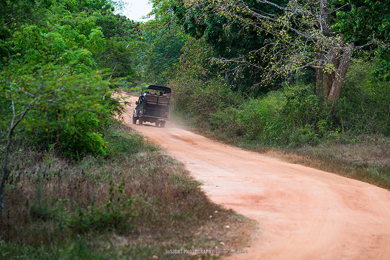 The safari track, Wilpattu Nastional Park